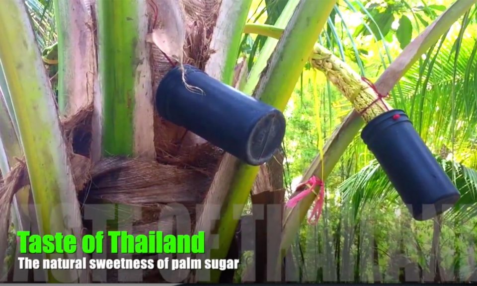 Making palm sugar in Thailand